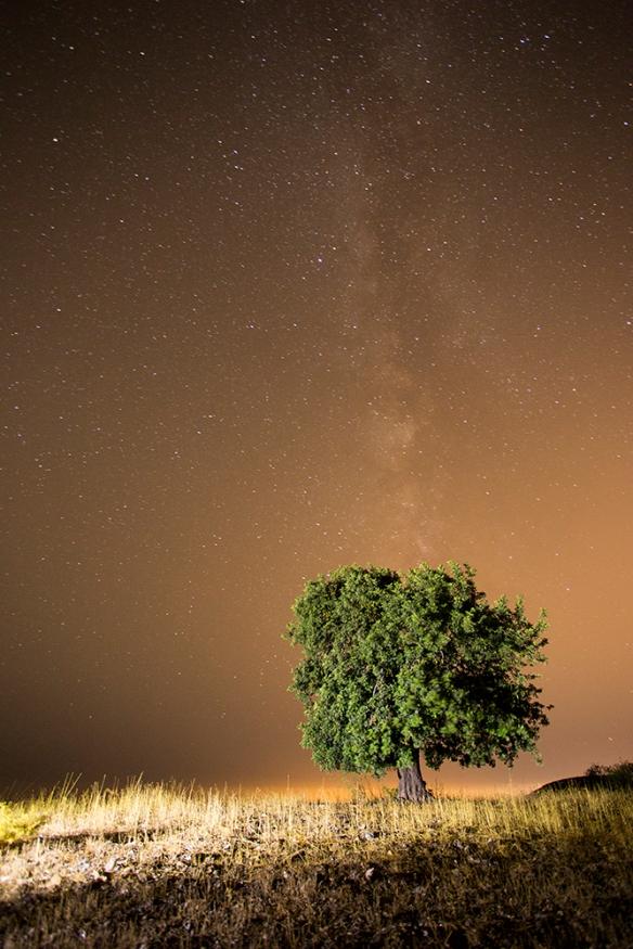 Algarrobo y Vía Láctea