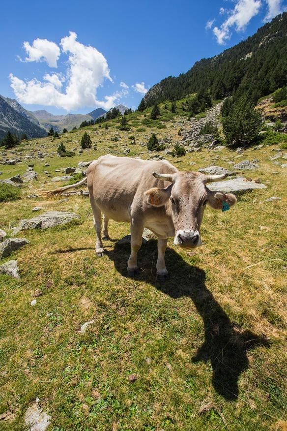Ternera ecológica Pirineos