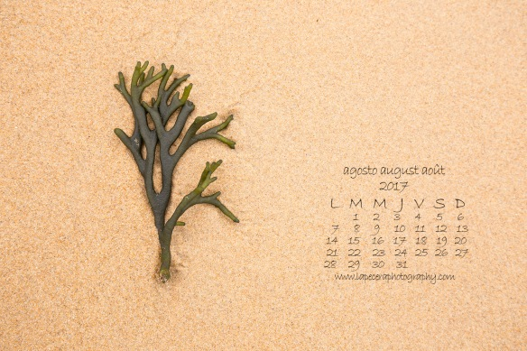 CalendarioAgosto2017